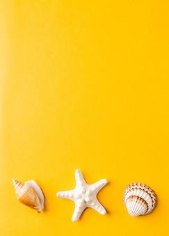 Divers coquillages sur jaune