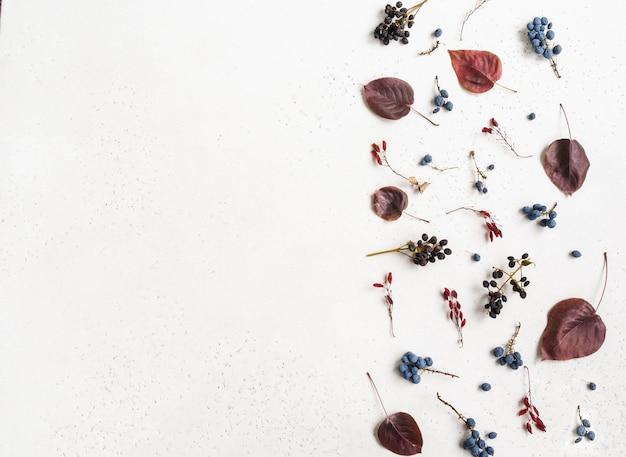 Diverses baies et feuilles de bordure d'arbres sauvages isolés sur fond blanc et espace ouvert pour le texte. fond de botanique. vue de dessus. mise à plat