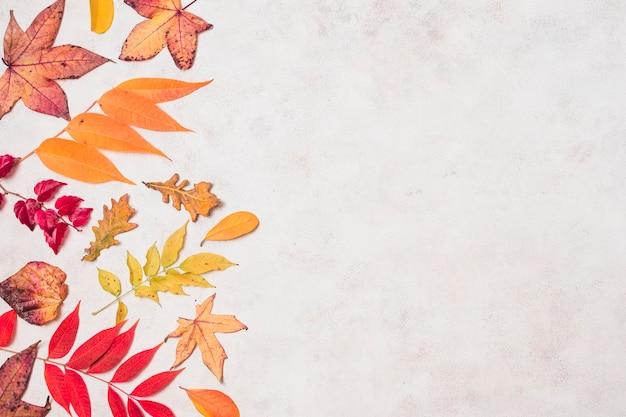 Diverses feuilles d'automne espace de copie