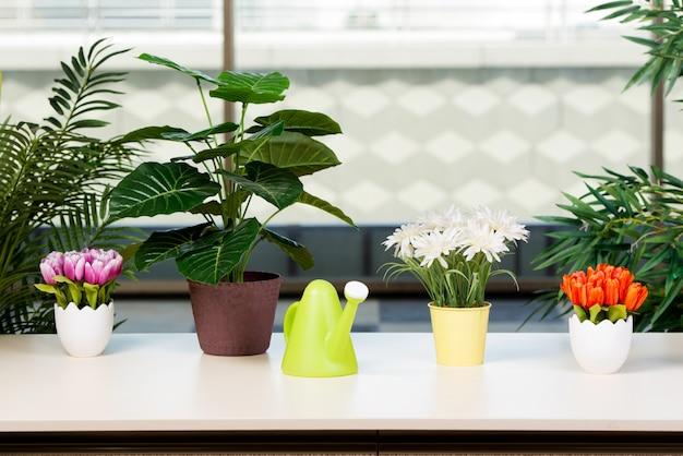Diverses fleurs disposées dans des pots de fleurs chez hme