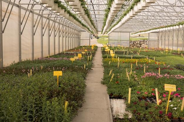 Diverses fleurs et plantes à l'intérieur de la pépinière