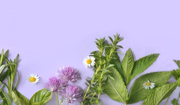 Diverses herbes aromatiques fraîches sur fond bleu