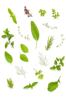 Diverses herbes fraîches isolent sur fond blanc.