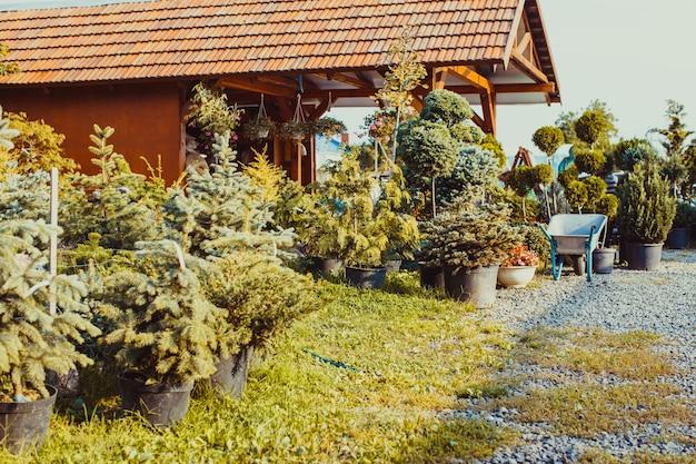 Diverses plantes à feuilles persistantes pour l'aménagement paysager et la rocaille