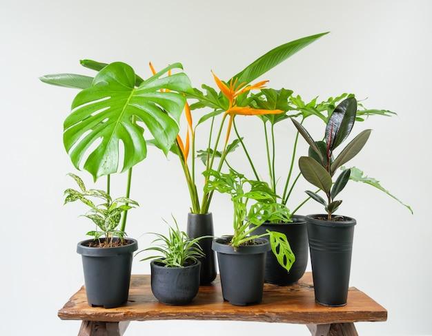 Diverses plantes d'intérieur dans un conteneur élégant et moderne sur un banc en bois dans une salle blanche
