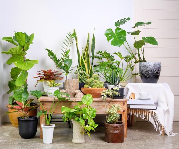 Diverses plantes d'intérieur dans un conteneur élégant et moderne sur un sol en ciment dans une salle blanche, purifier l'air naturel avec monstera, philodendron selloum, palmier aroïde, zamioculcas zamifolia, ficus lyrata, plante de serpent