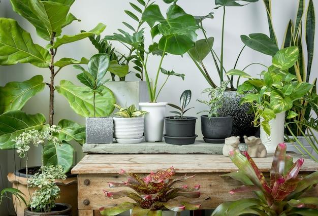 Diverses plantes d'intérieur feuilles vertes purifier l'air naturel avec monsteraphilodendron selloum aroid palmzamioculcas zamifoliaficus lyratasnake plantbromeliadspotted betle sur table en bois