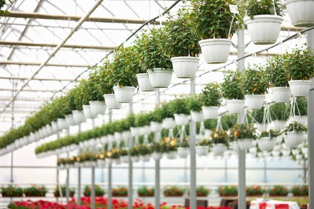 Diverses plantes d'intérieur suspendues dans des pots à effet de serre