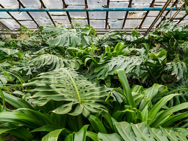 Diverses plantes tropicales. les arbres et les palmiers poussent dans des conditions de serre