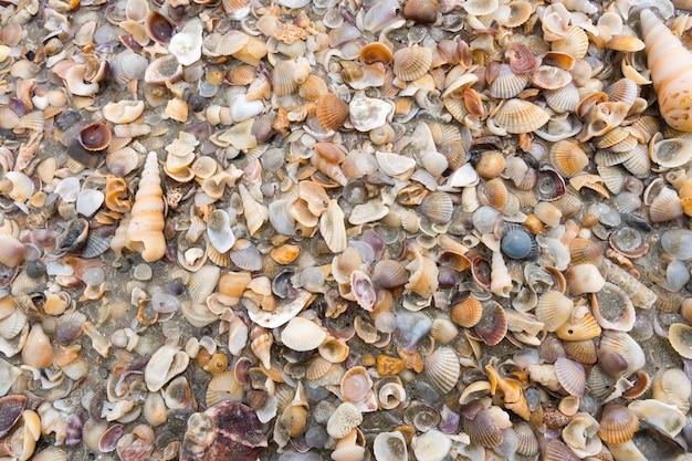 Diverses textures de petits coquillages sur le beacch.
