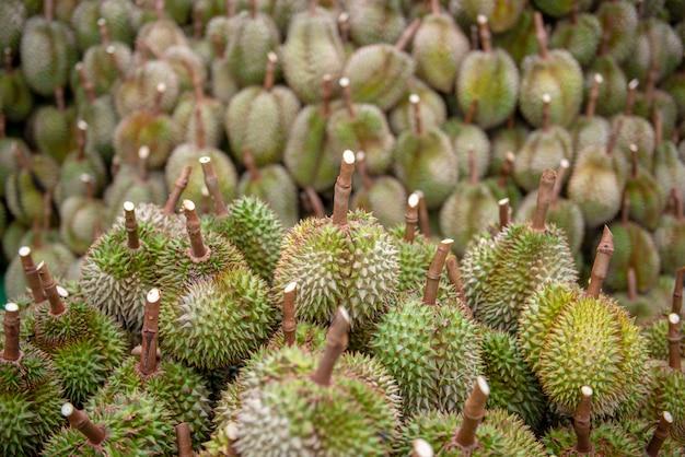 Division durian, après que les agriculteurs eurent collecté les produits depuis le début à chanthaburi, thaïlande