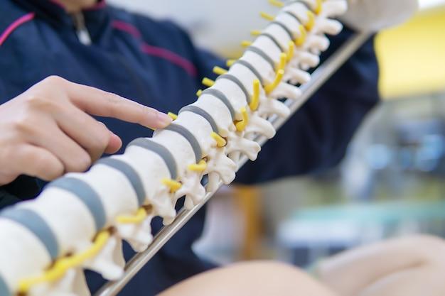 Docteur professionnel pointé sur la zone de la colonne vertébrale du modèle anatomique
