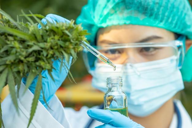Docteur en science avec l'extrait d'huile de cannabis sativa essentiel à partir de feuilles de marijuana pour une plante médicinale à base de plantes.