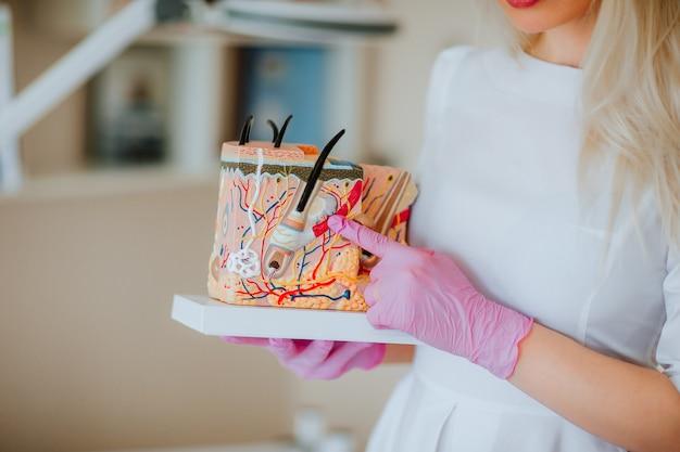Docteur tenant un modèle en plastique de structure de peau dans le cabinet