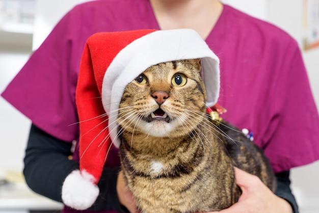 Docteur vétérinaire examinant un chat mignon avec un chapeau de père noël