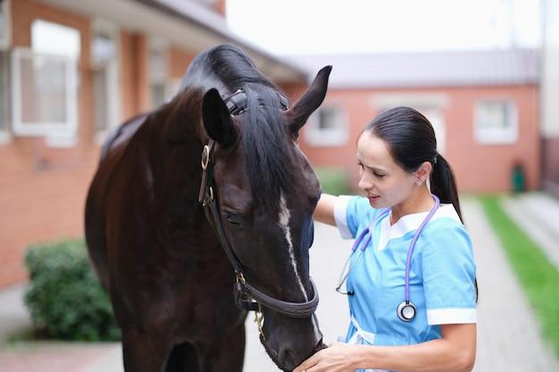 Le docteur vétérinaire féminin procède à un examen physique du cheval noir