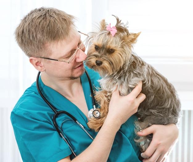 Docteur vétérinaire tenant yorkshire terrier chien sur les mains à la clinique vétérinaire. concept de soins pour animaux de compagnie