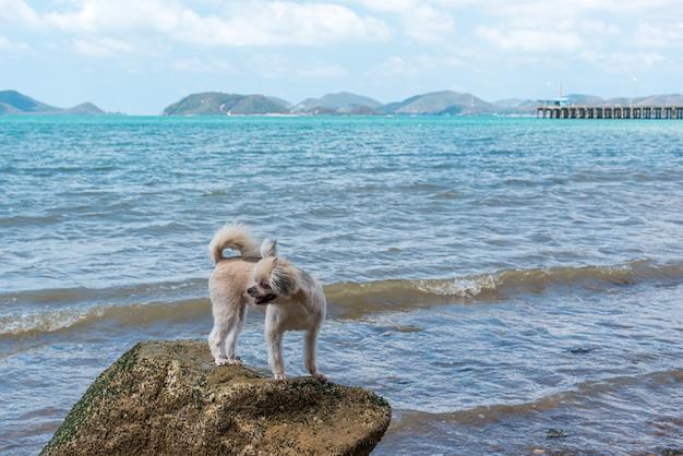 Dog fun fun sur la plage rocheuse lors d'un voyage en mer