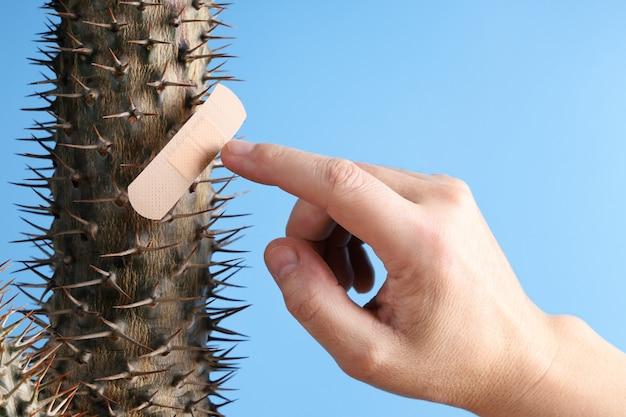Le doigt de la main s'approche des épines de cactus, qui sont une protection avec un pansement médical