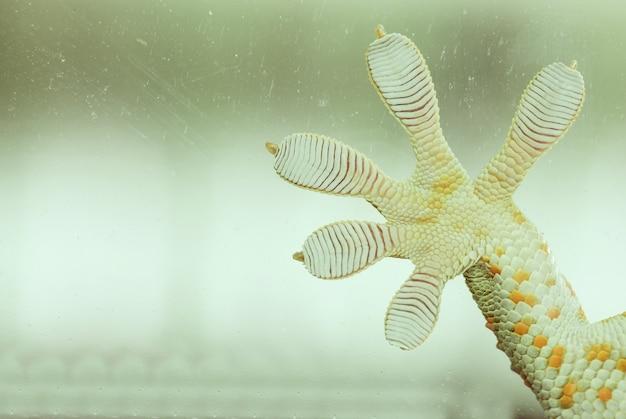Doigts de gecko sur verre - macro d'alimentation sous vide - autocollant mural