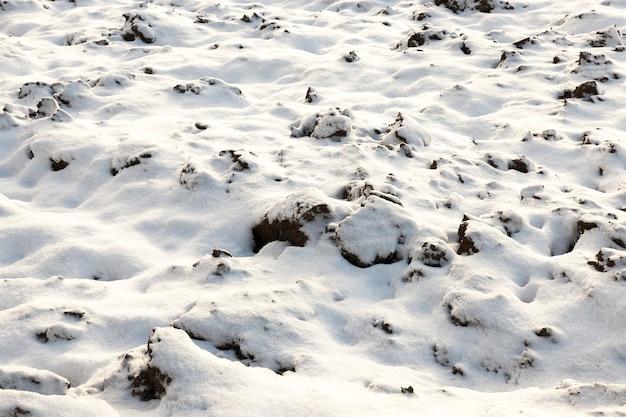 Domaine agricole dans une saison d'hiver. au sol, il y a de la neige blanche après une chute de neige.