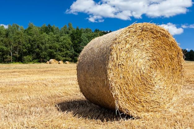 Domaine agricole sur lequel il y a des piles après la récolte du blé