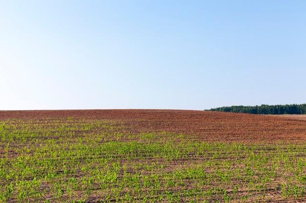 Domaine agricole sur lequel pousse la récolte des produits nécessaires à l'alimentation des personnes ou des animaux