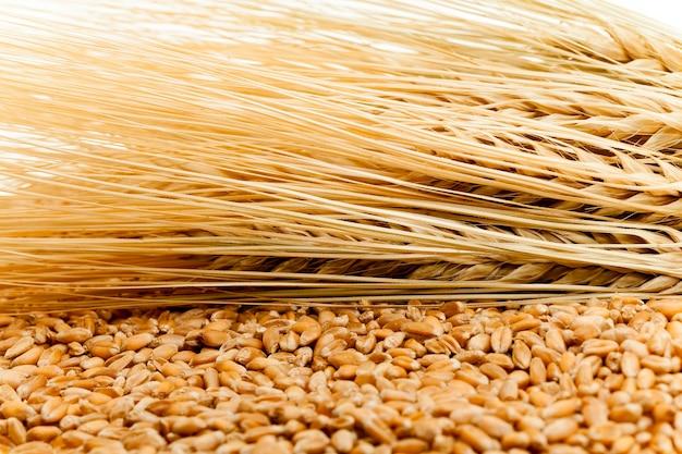 Domaine agricole sur lequel poussent des céréales mûres