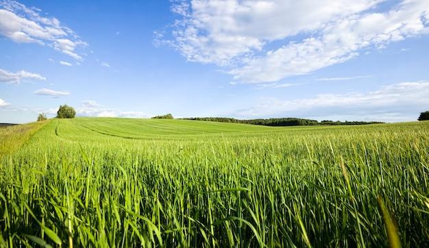 Domaine agricole sur lequel poussent des céréales
