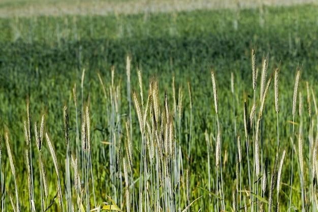 Un domaine agricole où l'on cultive des céréales