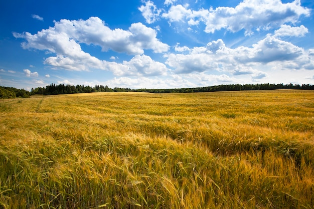 Domaine agricole où poussent des céréales