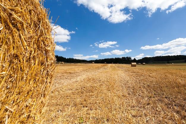 Domaine Agricole Photo Premium