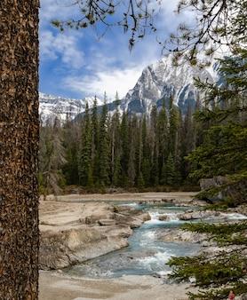 Donner un coup de pied, rivière, dans, yoho parc national, colombie britannique, canada
