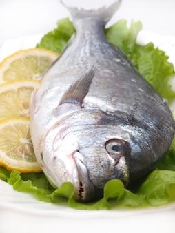 Dorade de poisson