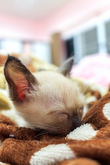 Dormir des petits chatons dans la chambre