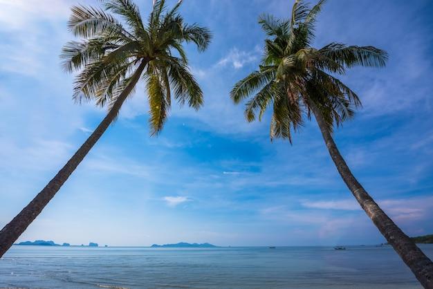 Double arbre de noix de coco à la plage