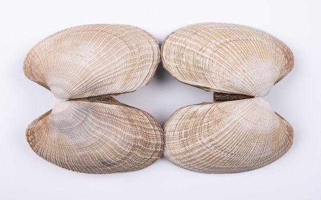 Double coquillages isolés sur fond blanc deux coquillages colorés isolés sur fond blanc
