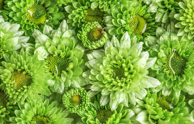 La douce fleur verte fraîche avec une goutte d'eau de pluie