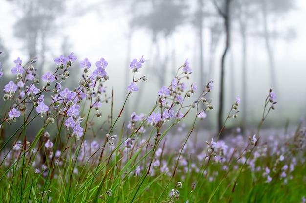 Douces fleurs violettes dans la forêt de pins