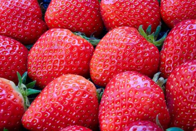 Douzaine de fraises rouges fraîches