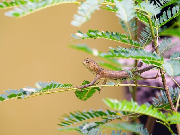 Dragon sur l'arbre