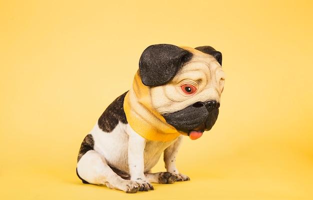 Drôle de bouledogue français porte un masque de carlin