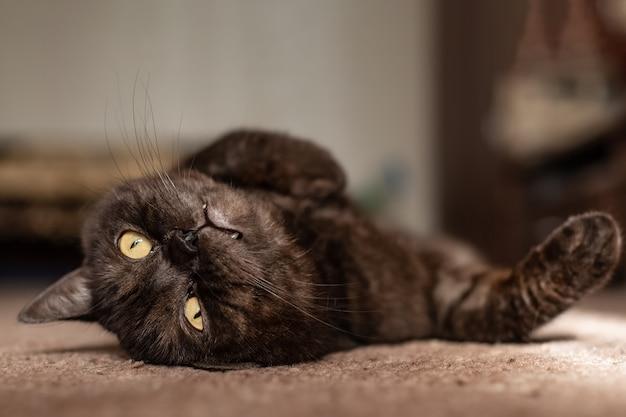 Drôle de chat tigré noir se prélasse au soleil