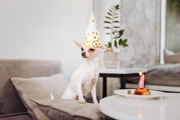 Drôle de petit chien debout sur un canapé gris clair près de la table avec un joli gâteau d'anniversaire