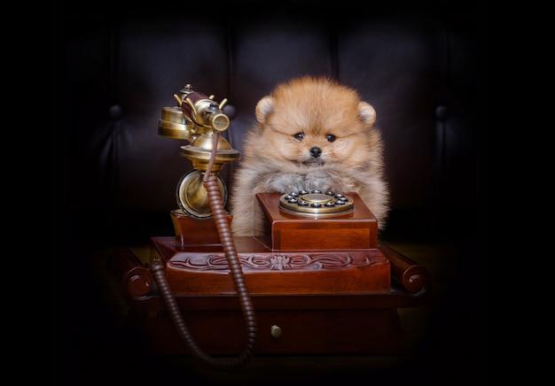 Drôle petit chiot est assis par le téléphone