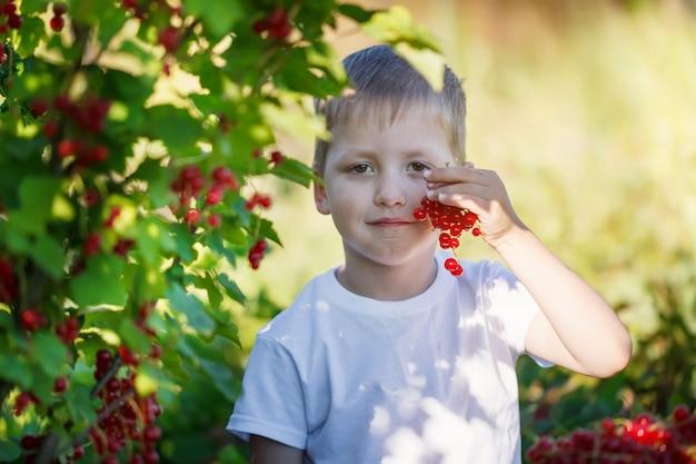 Drôle petit enfant ramassant des groseilles rouges de buissons de groseilles dans un jardin.