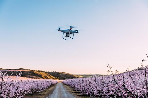 Dron survolant le champ de fleurs