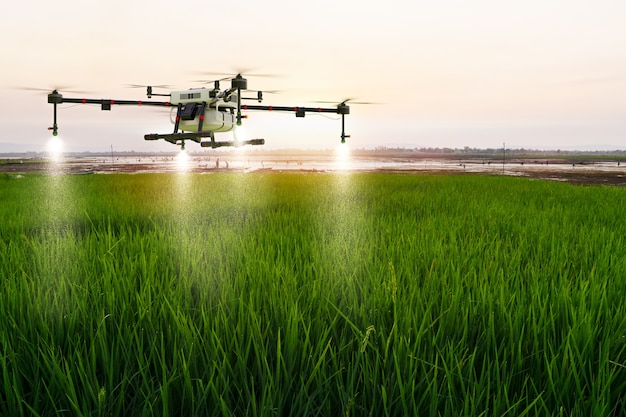Drone agricole volant sur une ferme de riz pour pulvériser de l'engrais, rendu d'illustration 3d