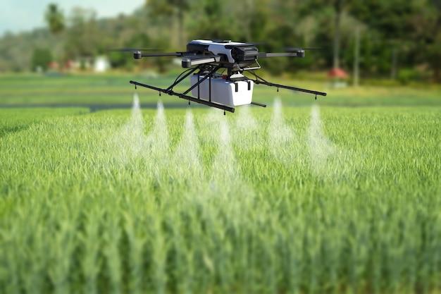 Drone pulvérisant des pesticides sur le champ de blé