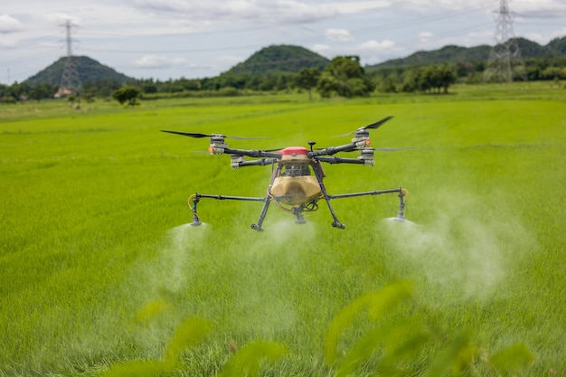 Des drones agricoles planent au-dessus des rizières en pulvérisant des engrais. les agriculteurs ont utilisé un drone pour pulvériser de l'engrais sur les rizières. concept de technologie agricole